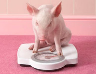 Overfeeding – North American Pet Pig Association