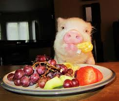 pig and fruit